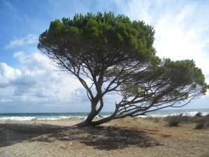 sardinia trees sea and wind